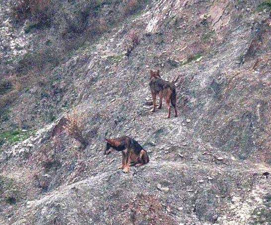 C 39 un tempo da lupi redaconredacon for Ardeatina arredamenti di lupi gabriella