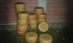Le foto del tentato furto di Parmigiano