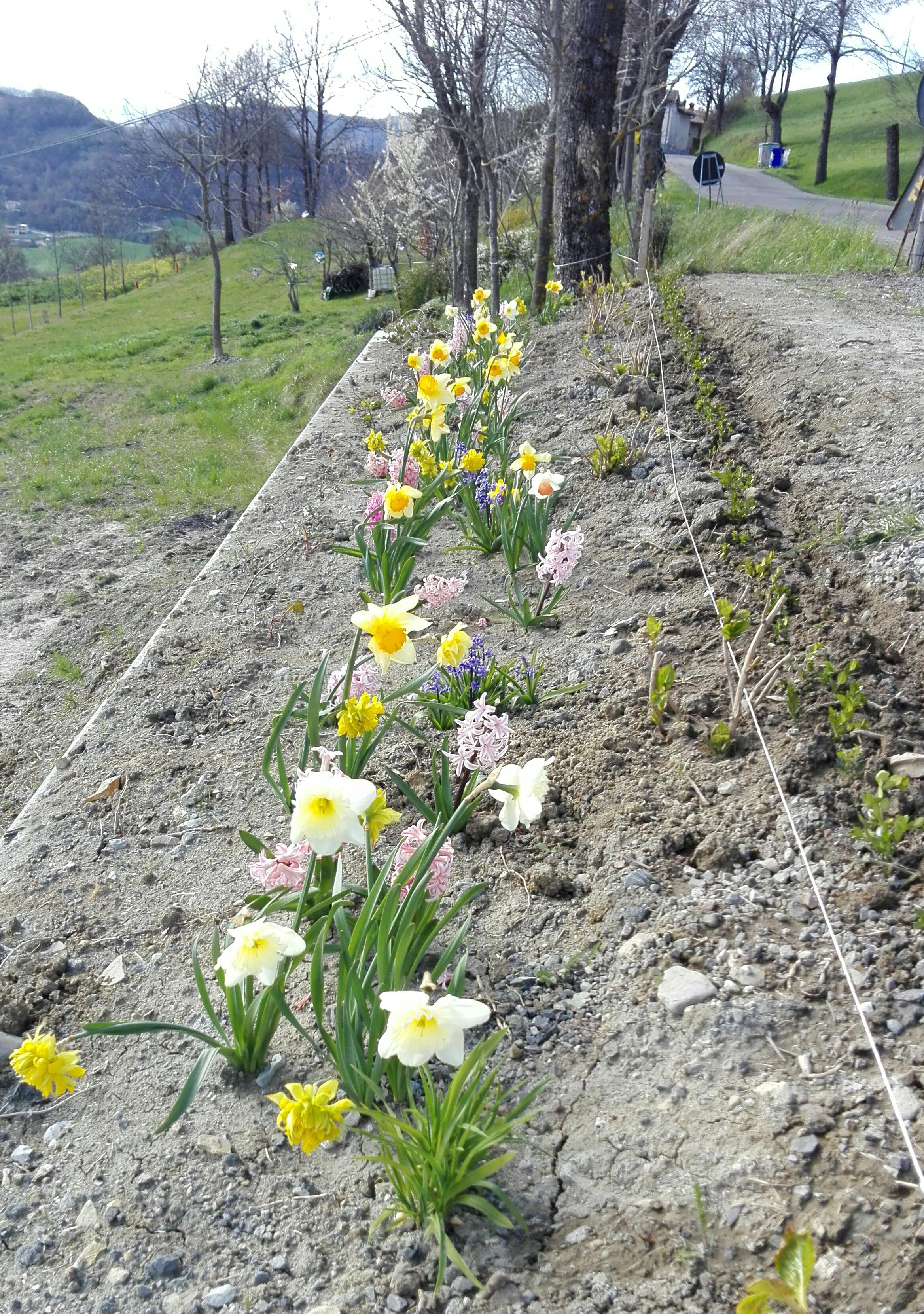 I fiori di ettorina un giardino creato sapientemente in un ripristino di frana sulla strada - Fiori di giardino foto ...