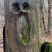 L'urlo nel bosco foto di Loretta Amorini