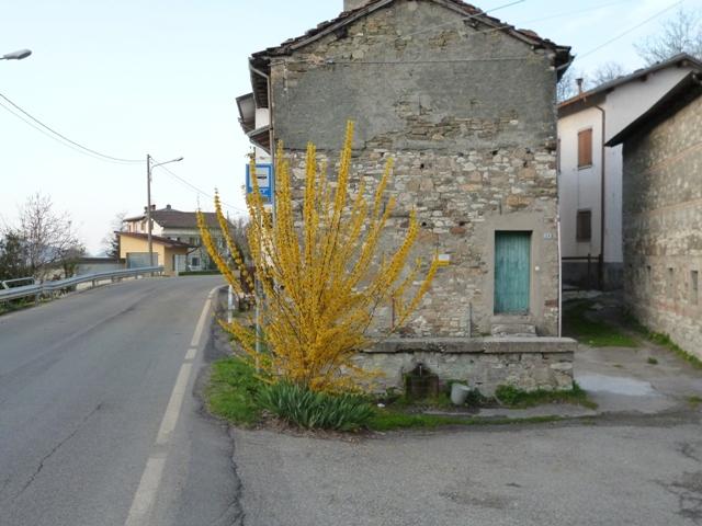 Primavera lungo la strada vicino Ramiseto (6.4.2014)