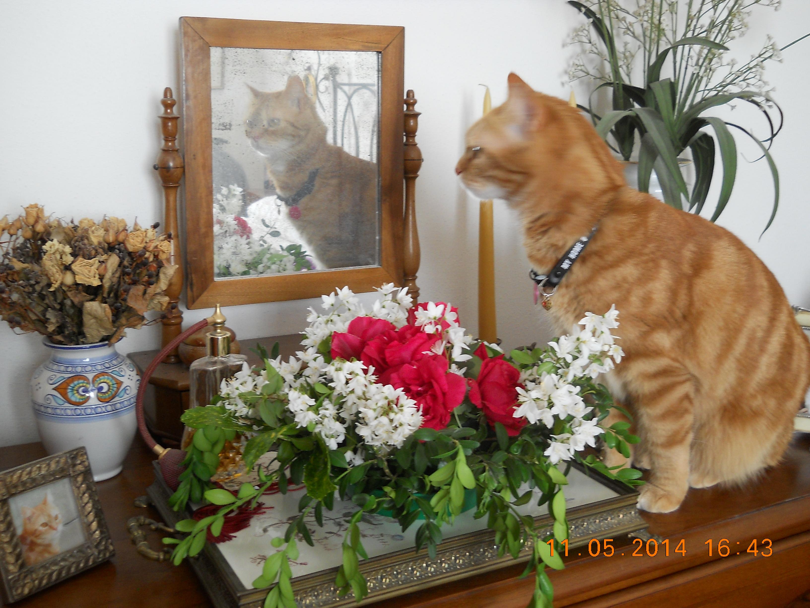Teodolinda allo specchio foto Cristina Casoli