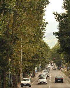 Viale Bagnoli ancora alberato 1