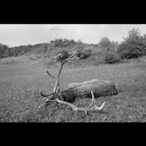 cervo_morto_abbattuto