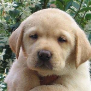 Non inteneritevi per quel cucciolo che viene dall 39 estero - Cucciolo da colorare stampabili ...